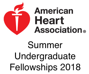 AHA Summer Undergraduate Fellowship